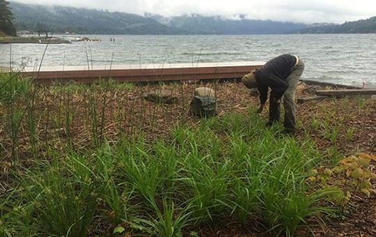Lake Whatcom, NVPAs, NGPAs, Residential Mitigation