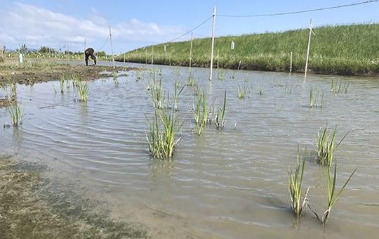 Wetland/Shoreline Buffer Mitigation